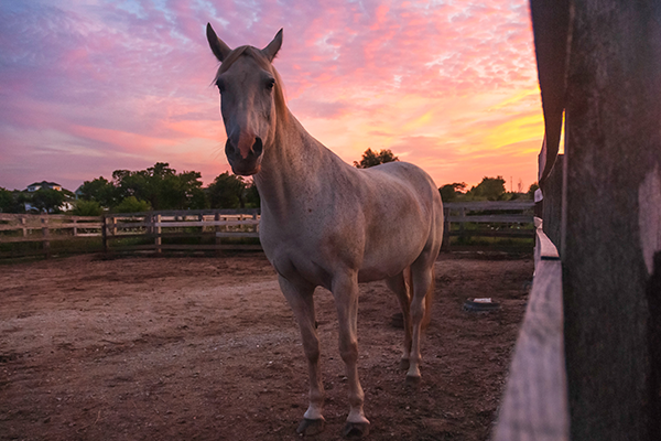 horse on equestrian property